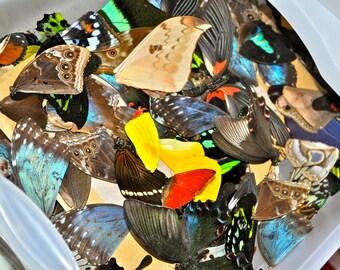 De-Stash:  Real Butterfly Wings