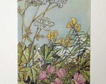 Wild Flower, Botanical, Floral book page, 1940's  Paper Ephemera, Scrapbooking, Collage, Framing PE185