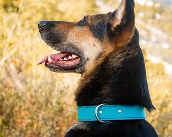 Turquoise Leather Dog Collar - Handmade Leather Dog Collar - Cute Leather Dog Collar - Puppy Leather Dog Collar, Made in USA