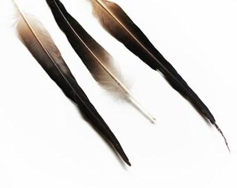Natural Grey Mallard (Drake) Duck Sword Tail Feathers 4-7.5″ | 5 pcs.