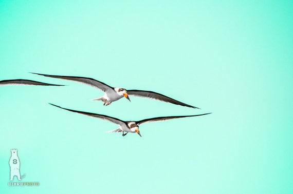 Aqua Wall Art Minimalist Home Decor Pop Bird Teal Simple Birds Flying Minimal Nature Skimmers TX