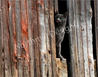 Barn Cat 3,  8 x 10 Limited Edition Print