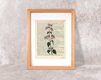 Oregano herb print-oregano dictionary print-Kitchen wall art-oregano on book page-herbs and spices print-botanical print-NATURA PICTA-DP095