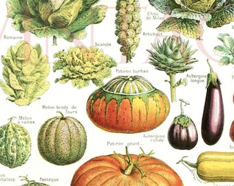 Vegetables print 1948 Vintage kitchen decor Vegetable poster Antique botanical print Botanical art French country decor kitchen wall hanging