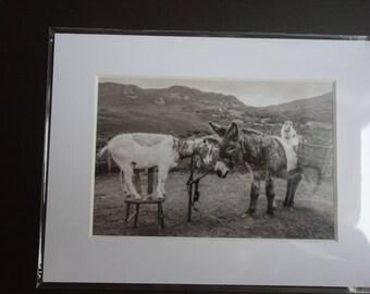 Photo of Dog & Donkey, Ring of Kerry Ireland. 6x4 photo in an 8x6 Photo Mount