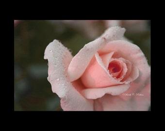 Rose Photography-Raindrops on Rose-Pink Wall Art-Romantic Wall Decor-Horizontal Print-Fine Art Photography-16x20 Wall Print-Bathroom Decor