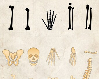 Bones clip art ,29 high resolution png human body bones, Instant Download,bone clip art anatomy