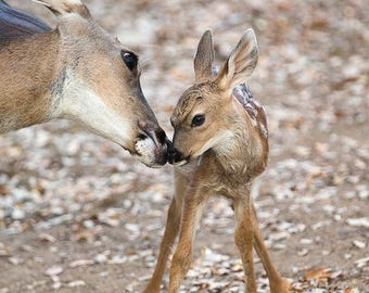 Cute MOM and BABY Deer Photo, Baby Animal Photo, Woodland Nursery Art, Mother and Baby Animals, Fawn Photo, Woodland Baby Shower, Kids Room