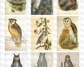 Owl Digital Download Collage Sheet 2.5 x 3.5 inch