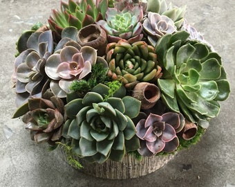 Succulent Arrangement in Mercury Glass Striped Vase