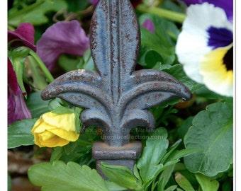 Fleur de Lis in Flowers Photograph