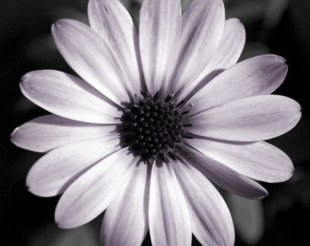 """Flower photo, purple, wall art, nature, symmetry, home decor, -- """"Perfectly Imperfect"""", a 10x10-inch fine art photograph"""
