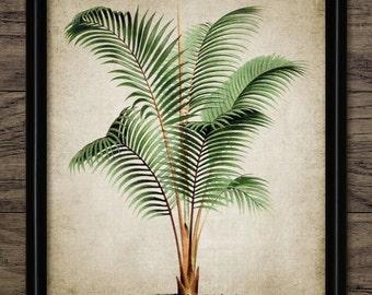 Vintage Palm Tree Print - Palm Tree - Palm Tree Botanical Wall Art - Digital Art - Printable Art - Single Print #814 - INSTANT DOWNLOAD