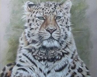 Coloured Pencil Portrait of a Leopard