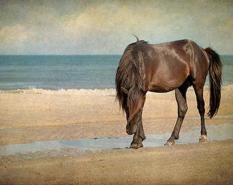 Horse Photography, Wild Horse, Print or Canvas, Mustang, Horse Art Photo, Stallion, Equine Art, Teal, Brown, Beach Cottage Decor - Noble