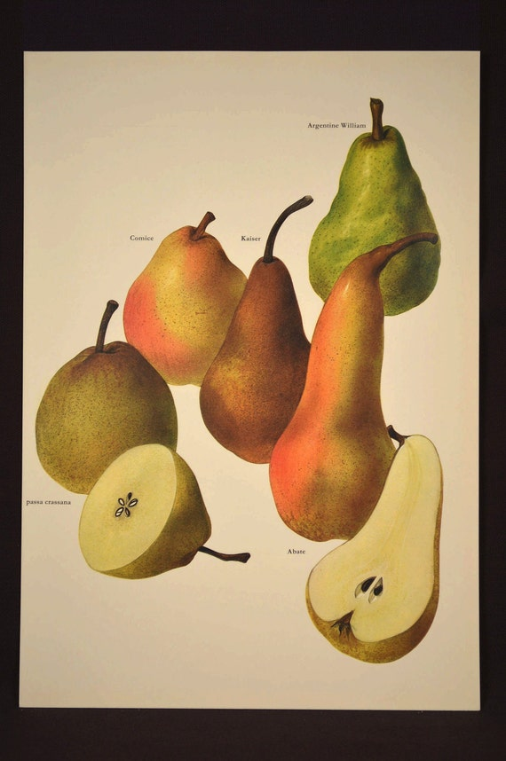 Pear Wall Art Decor Fruit Wall Art Kitchen Decor Pears