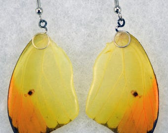Real Butterfly Earrings - Anteos Menippe - Hand Cast Resin