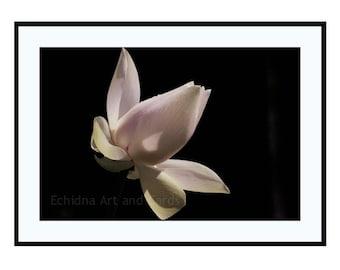 Lotus Art Print, Calming Print, Zen Decor, Pink Flower Photography, Large Nature Wall Art, Meditation Room Art