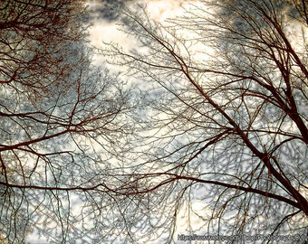 Fine Art Photography of a Winter Tree, Tree Photography, Nature Photo, Bare Tree Branches, Cottage Wall Art, Kitchen Wall, Mudroom Decor