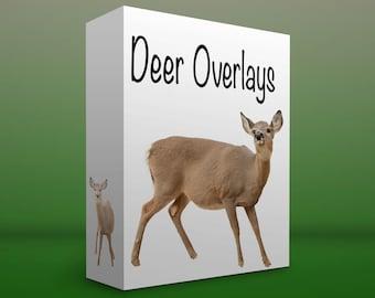 Doe deer overlays