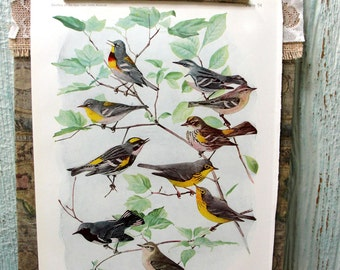 Vintage Book Page, Book Print, Illustration, Bird Print, Lithograph, Color Plate, 1920s Book Page, Bird Art, Warblers, Yellow Bird
