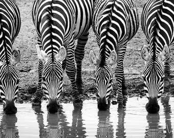 Four Zebras At The Waterhole