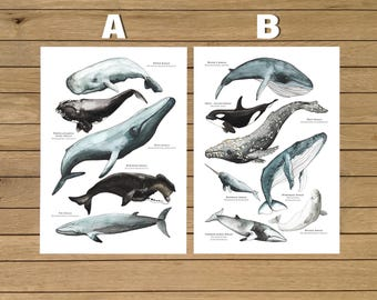 Whales Poster, Watercolor Illustration, Giclée Print, Wall Art Decor, Home Decor, Nursery Decor, Poster, A3 (11.7x16.5 in), A4 (8.3x11.7 in)