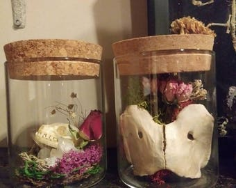 Deer Vertebrae in Jar