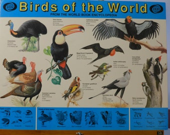 World Book Encyclopedia. Birds of the World. Educational Poster. (1990)