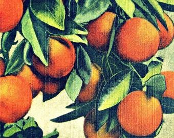 ORANGES print, Rustic Kitchen Decor, vintage botanical, Oranges Wall Art, Wall Print with Oranges Fruits Wall Art, Rustic Kitchen Wall Decor