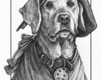 Pet Portraits With a Story to Tell
