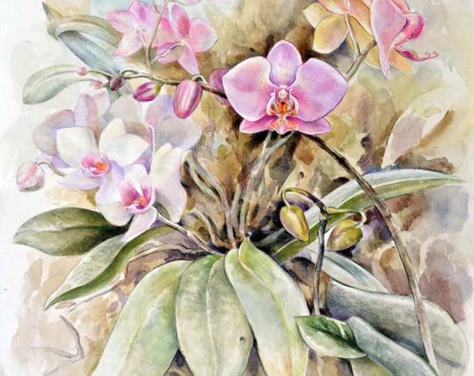 simple orchids paintings - 680×540
