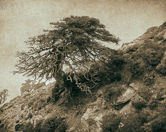Art photography, nature photography, antique photography, landscape photography, sepia, decorating sheets, paintings.