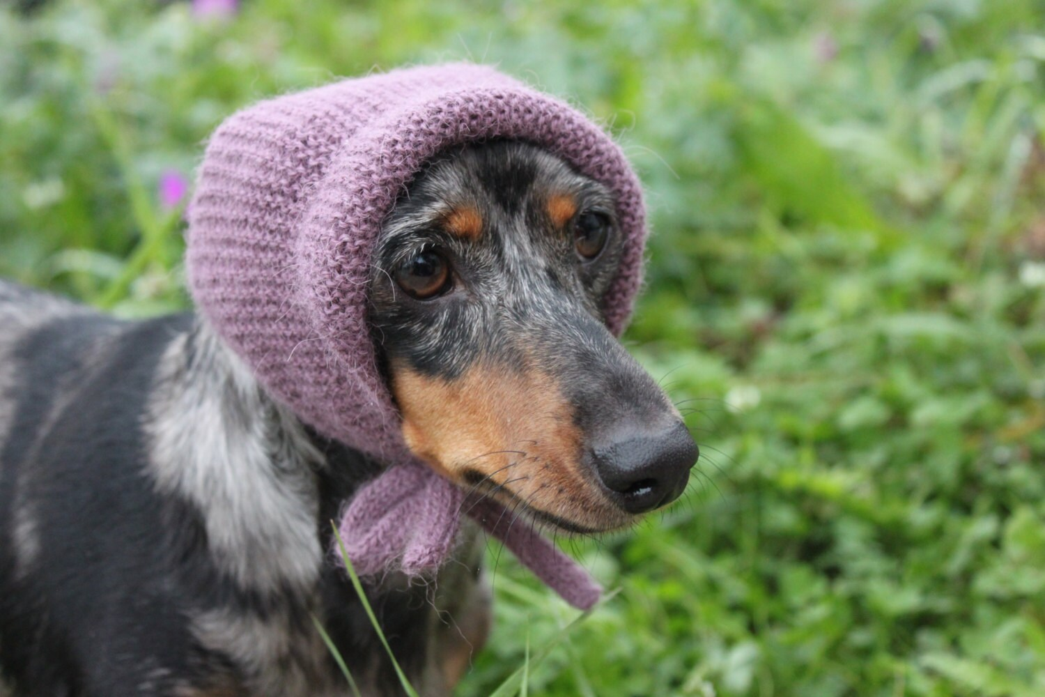 Knitting pattern mini dachshund dog hat dog dachshund zoom bankloansurffo Gallery
