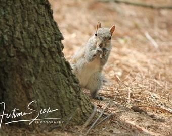 Peekaboo Squirrel