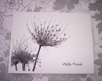 Dandelion Hello Friend, All occasion Note Card Set Of 10