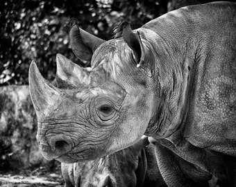 Rhino Photo Art Print