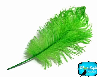 Ostrich Feathers, 10 Pieces - LIME GREEN Ostrich Tail Feathers : 3498