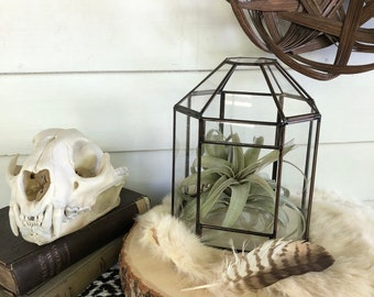 Geometric Brass and Glass Terrarium . Naturalist Display . Tillandsia . Farmhouse Living . Bohemian Decor . Greenhouse Style Case