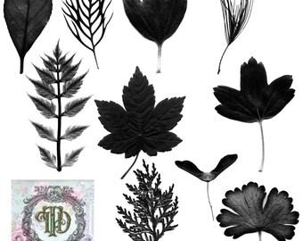 16 Leaf Digital Stamps