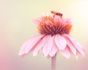 Flower Photography - Animal Photo - Pink and Yellow Photo - Bee - Home Decor - Nature - Flower Wall Art