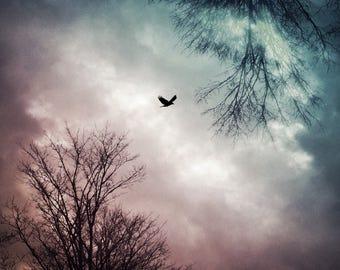 dramatic sky photo PRINT, fine art decor bird flying photograph, nature pink blue landscape, surreal dreamy home spirit animal spiritual zen
