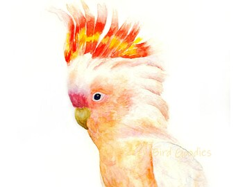 Major Mitchell Cockatoo Print, Bird Art, Bird Print, Bird Artwork, Watercolor Print, Prints Wall Art, Pink Cockatoo, Leadbeater's cockatoo