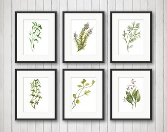 Kitchen Herb Print - Kitchen Herbs Wall Art - Herb Kitchen Decor Illustrations - Herbs Print - Herbs Wall Art - Watercolor Herbs - Basil Art