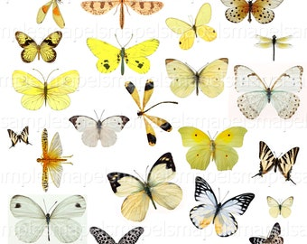 Digital Collage Sheet Butterflies butterfly clipart Digital Scrapbook Paper butterfly yellow white butterflies vintage Jpeg and PNG images