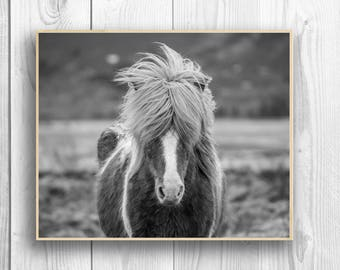 Icelandic Horse Photography Print, Horse Art, Wall Art, Black and White Print