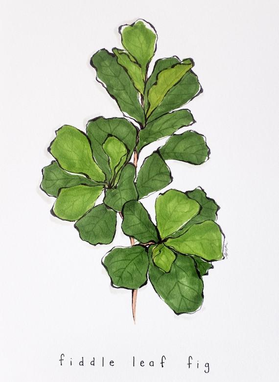 Fiddle Leaf Fig Art Print Illustration