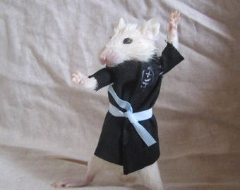 taxidermie rat kimono taxidermy rat cabinet de curiosité odditties