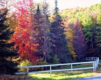 Canvas wall art, fall photography, autumn art, wall art canvas, fall art, extra large wall art, fall decor,tree art, large art,Vermont