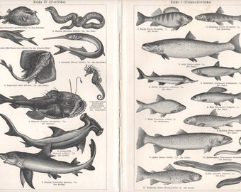 Fishes, Fish Map, Antique Lithograph Print, Freshwater, Sea, Illustrations